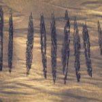 14 lodí uprostřed pouště byl nečekaný objev