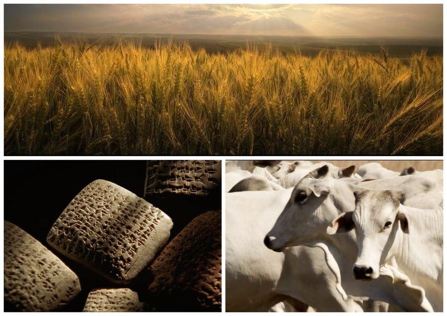 Jídelníček starověkých Egypťanů tvořila převážně pšenice a ječmen